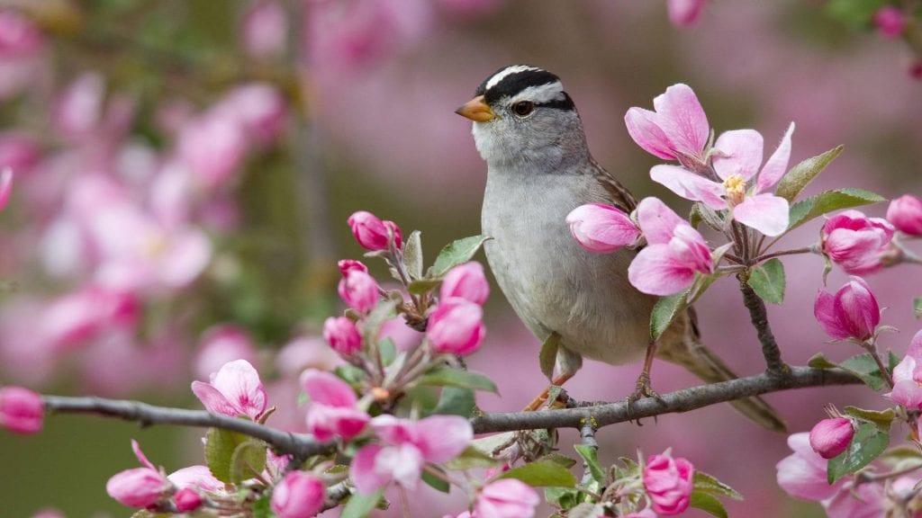 ptica-na-vetke