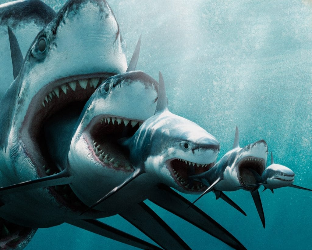 sharks of buisness