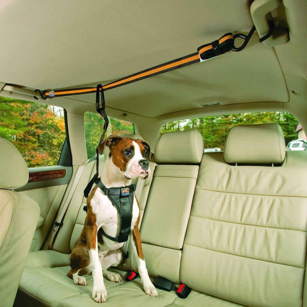 for dogs in car