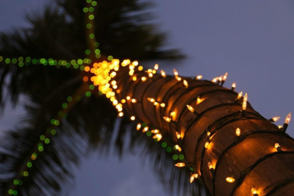 Xmas-palm