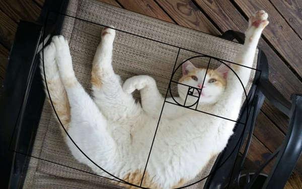 fibonacci_cat