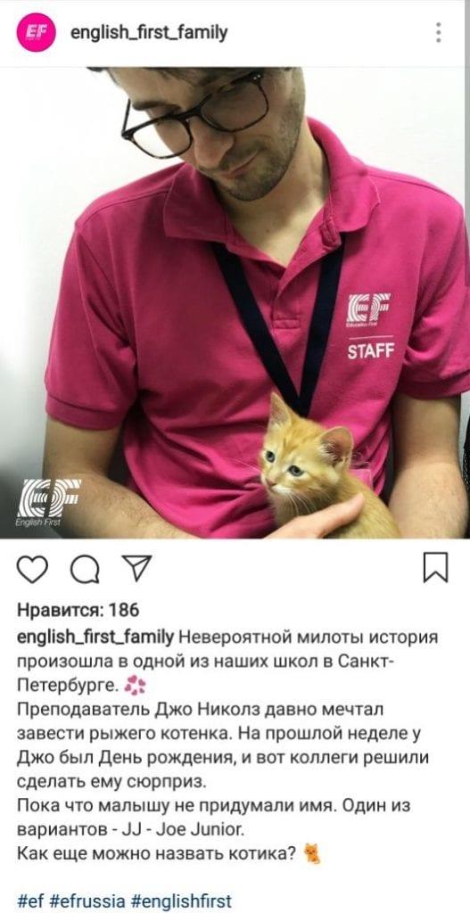 EF как назвать кота
